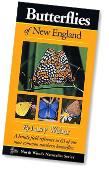 Butterflies of New England