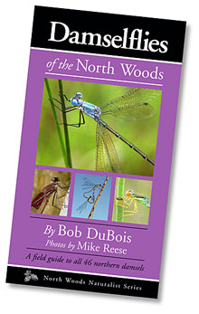 Damselflies of the North Woods